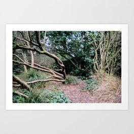 Trees of Finchley 3 Art Print