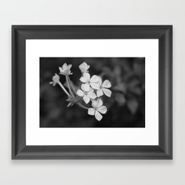 Plumbago Framed Art Print