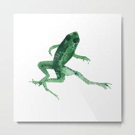 Study of a frog #03 Metal Print