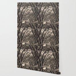 Acacia Grove Wallpaper