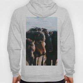 Horses in Iceland - Wildlife animals Hoody