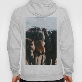 Horses in Iceland - Wildlife animals Hoody