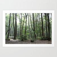 Northern Cali Forest Art Print