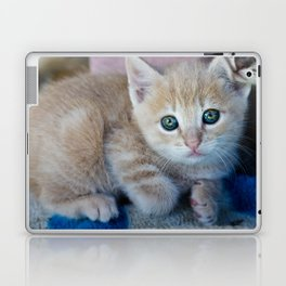 Red Kitten Laptop & iPad Skin