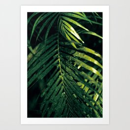 Palm Tree Leaves Art Print