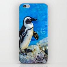 Penguin meeting iPhone & iPod Skin