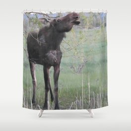 Missy willows evening Shower Curtain