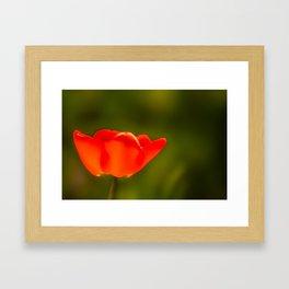 La tulipe orange Framed Art Print