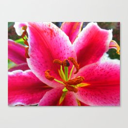 Call Me Miss Lily Canvas Print