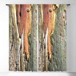 Eucalyptus Tree Bark and Wood Abstract Natural Texture 59 Blackout Curtain