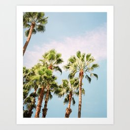 Green palm trees on blue | Marrakech travel photography | Colorful film photo art Art Print