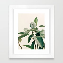 Plant Leaves Framed Art Print