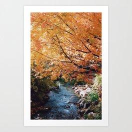 Fall Leaves on Autumn Trees - 35mm film Art Print