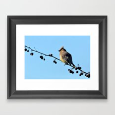 Waxwing on a Winter's Day Framed Art Print