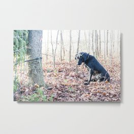 Black Labrador Retriever on a Hunt Metal Print