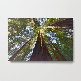 California Redwoods Metal Print