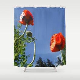 Poppy Friends Stretch to Sky in Haines, Alaska by Mandy Ramsey Shower Curtain