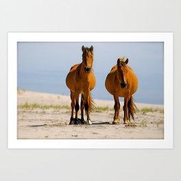 Sable Island Wild Horses Art Print
