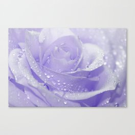 Rose with Drops 085 Canvas Print