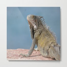 Green Iguana on the rock Metal Print
