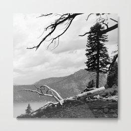 states of trees Metal Print