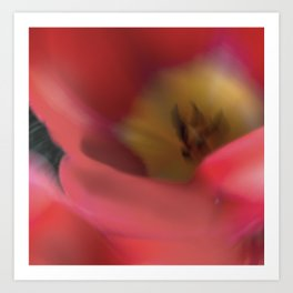 Tulips_217 Art Print
