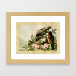 Vintage Birds with Nest Framed Art Print