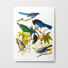 Yellow-billed Magpie Bird Metal Print