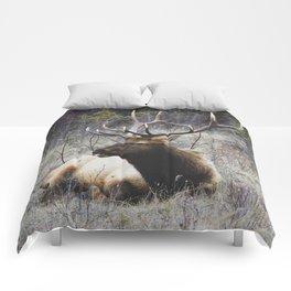 Buck in Grass Comforters