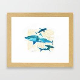 Sharks Framed Art Print