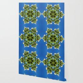 Hydrangea kaleidoscope - white flowers, green leaves, blue sky 161134 k6 Wallpaper