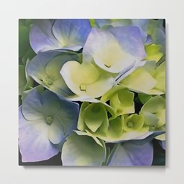Blue And Yellow Hortensia Artisitic Blossom Metal Print