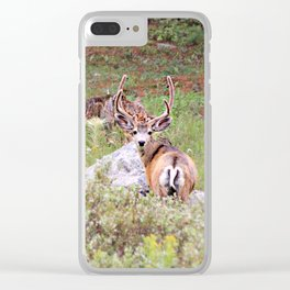 Muley in the Willows Clear iPhone Case