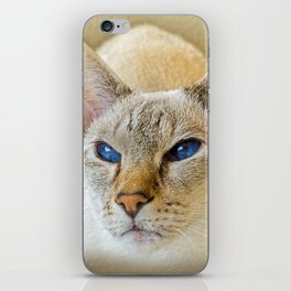 SIAMESE CAT LOVE iPhone Skin
