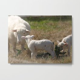 Picnic Guests Metal Print