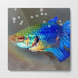 Betta Fish Metal Print