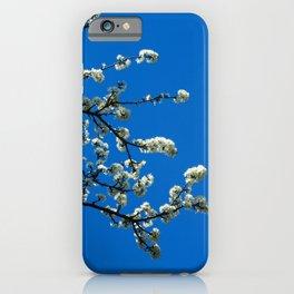 White blossom, blue sky iPhone Case