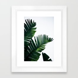 Palm Leaves 16 Framed Art Print