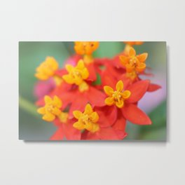 Succulent Red and Yellow Flower III Metal Print