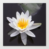 lotus flower Canvas Prints featuring Lotus by  Devin R.