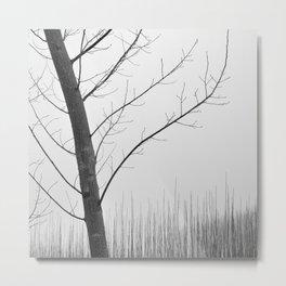 Young Ploplars. Bw. Foggy morning Metal Print