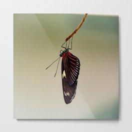 Hanging Doris Longwing Butterfly Metal Print