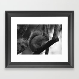 Winter Squirrel Framed Art Print