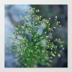 Mini Dandelions Canvas Print
