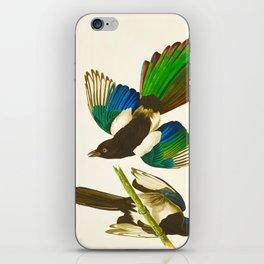 Magpie Vintage Scientific Bird Illustration iPhone Skin