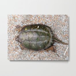 Snapping Turtle2-from the top Metal Print