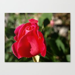 """Rose Bug"" Canvas Print"