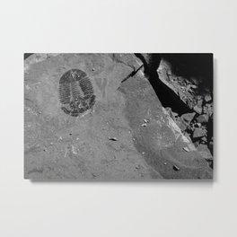 Utah - Trilobite Fossil Shards Metal Print