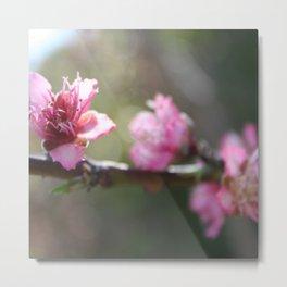 A Bough Of Blurred Peach Blossom Metal Print