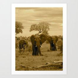 Elephant sepia Art Print